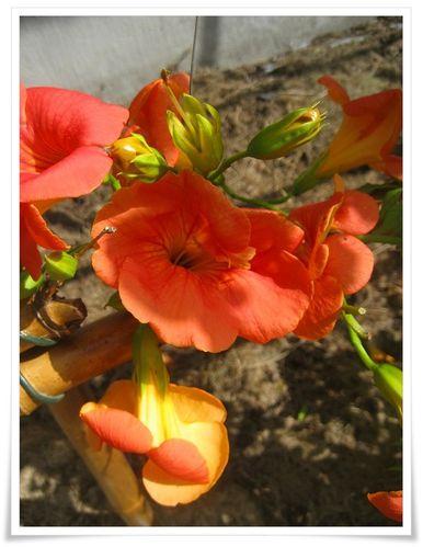 03_FleursETE-23--copie-1.JPG