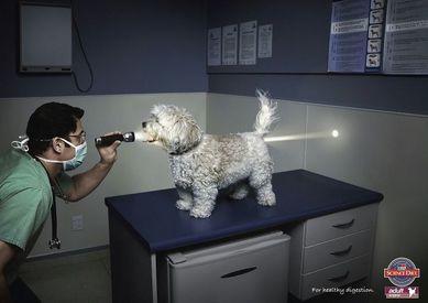 publicite-Science-Diet-Dog-Food.jpg