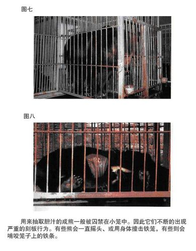 10 urgence animaux de chine ours