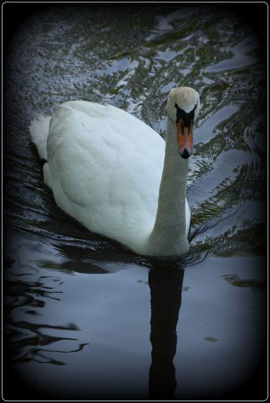 Animaux--oiseaux-6486.JPG