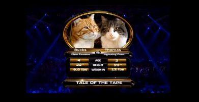 cat-boxing.jpg