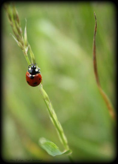Macro---Insectes--Papillons--7655.JPG