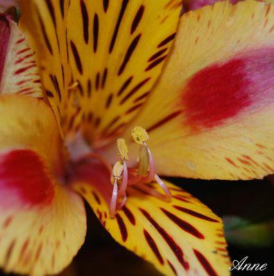 rouge et jaune 1