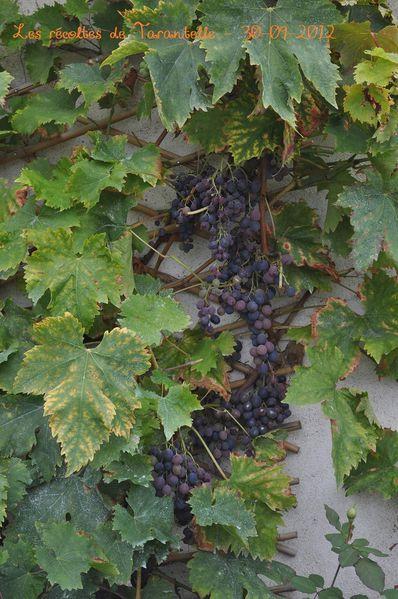 2012---mon-jardin-0964.JPG