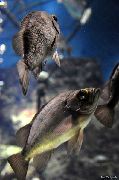aquarium 5813mini