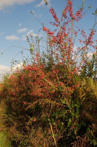 haies-automne-2.jpg