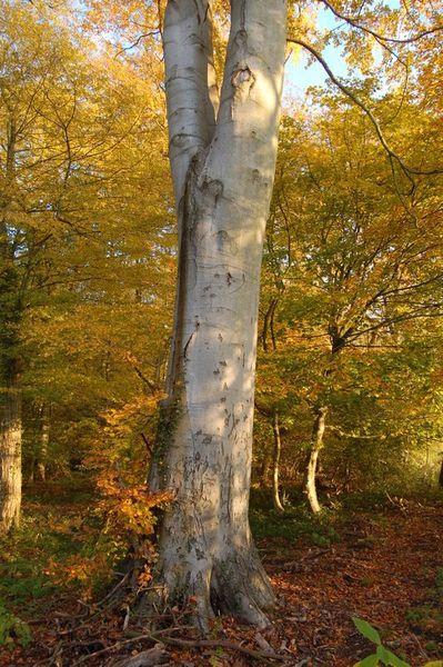 Balades-Nature 0975