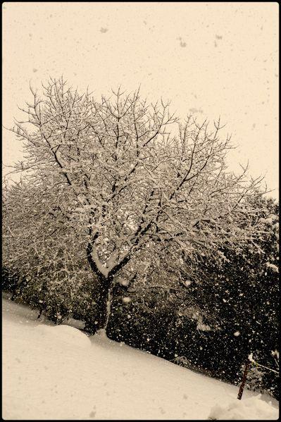neige2 lanmeur