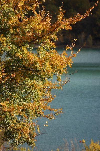 automne-11 0141