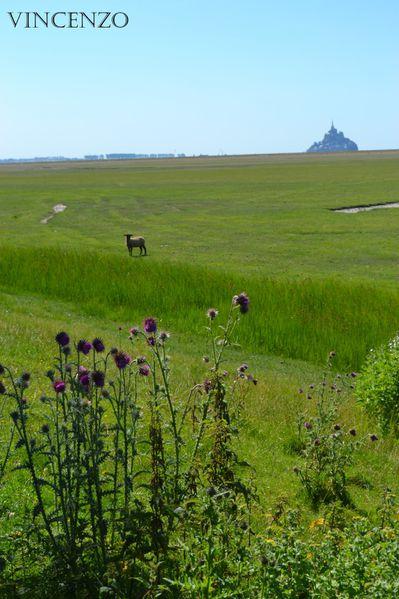 Normandie mont saint michel 818