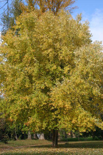 2012_novembre-montesquieu-038.jpg