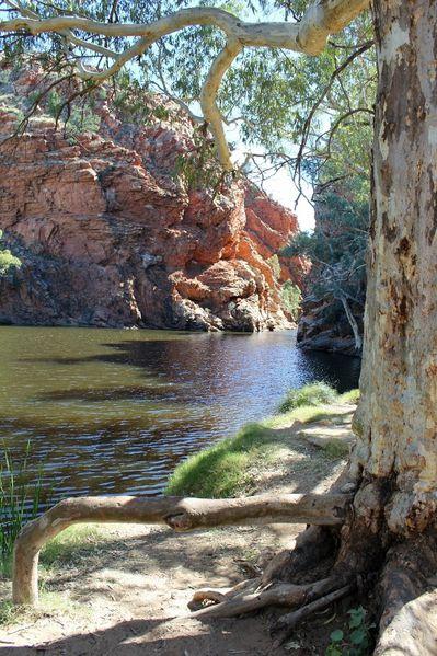 Aussie-oie-MAI-2012 9083 (533x800) (2)