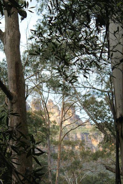 Aussie-oie-mai-2012-5 0963 (533x800)