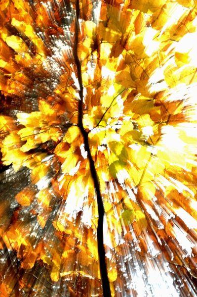 eclats-d-automne 4209+@