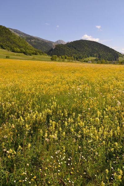 2012-06-01-plaine-de-lans 0103