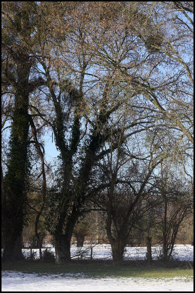 arbres-en-decembre-2010-.jpg