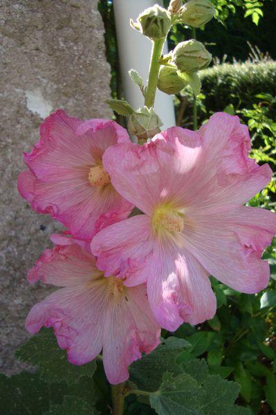 fleurs 30 juin 002