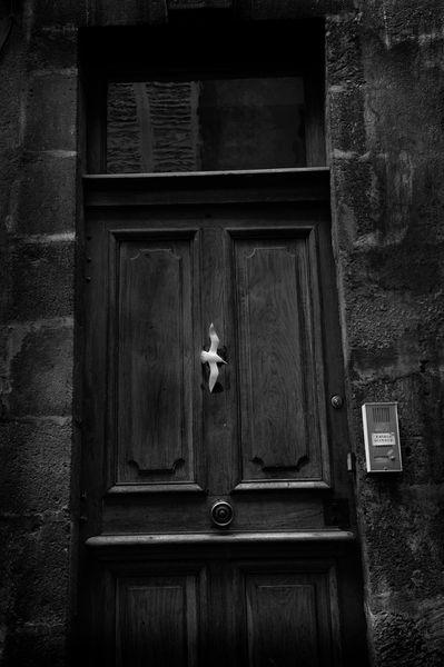 un-oiseau-sur-une-porte.jpg