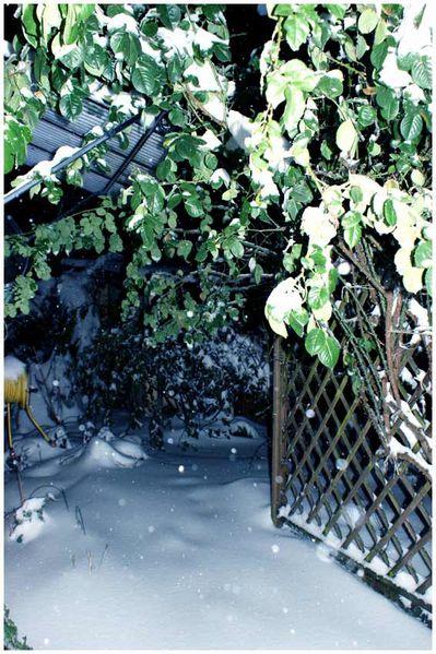 24.12.2010.jardin nuit 1