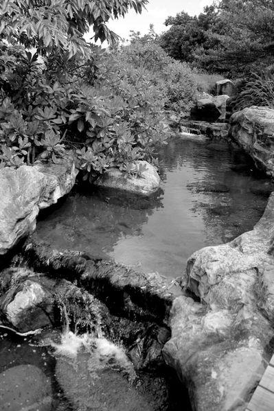 Wetland (3)