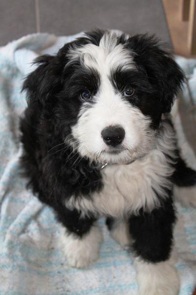 Cookie 2 mois et demi