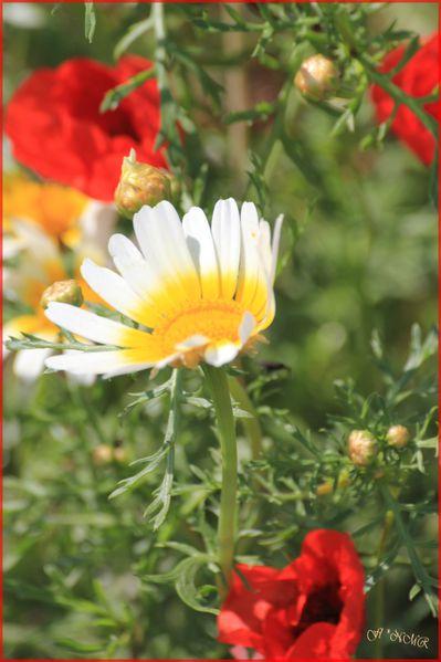 vacances-Rhodes-8-mai-2012-003.JPG