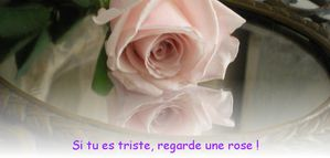 rose miroir