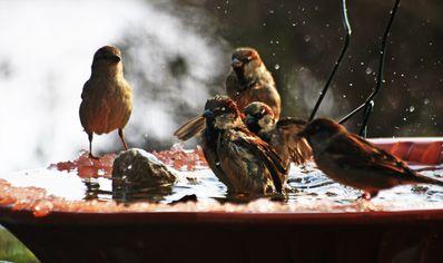33 Oiseaux(08)