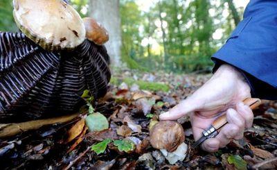 Balade aux champignons 018