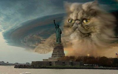 600-fake-hurricane-sandy-photo-cat.jpg