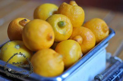 bergamotes-logo.jpg