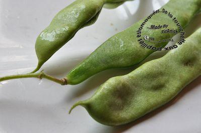 Haricots-verts-plats-logo.jpg