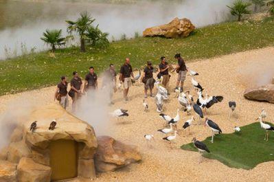 les maîtres de l'air (zoo parc de Beauval)