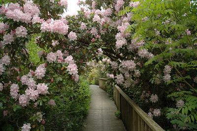 Lost-Gardens-of-Heligan---rhododendron-bridge.jpg