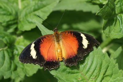 Photo gratuite : Papillon exotique – Serre aux papillons