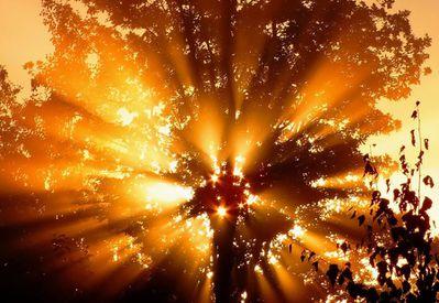 lumière arbre 25