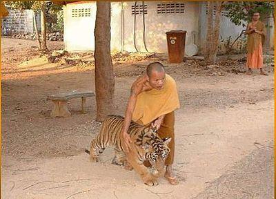 defi-62-le-tigre.jpg