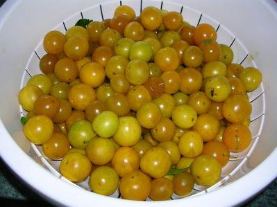 tarte-aux-prunes-001.JPG
