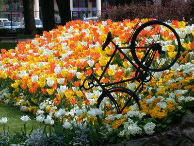 jardin-jardin-public-de-vienne-923_1.jpg