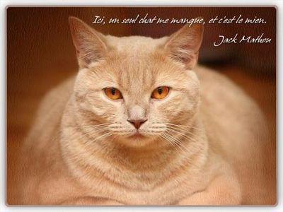 chat le mien jack blog