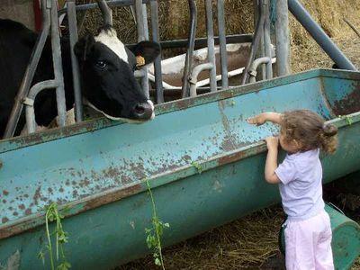 Loan vache
