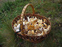 Balade aux champignons 022