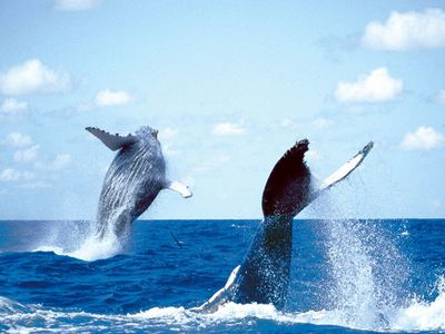 animal baleines 58