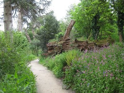Lost-Gardens-of-Heligan-tree-across-path.jpg