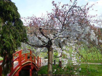 2014 Jardin japonnais en fleurs 03