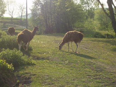 Parc animalier, route de Cuchery - samedi (13)