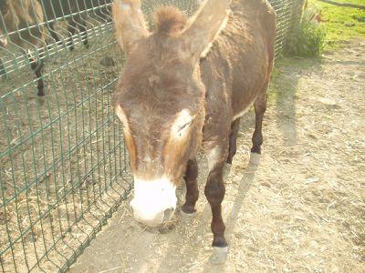 Parc animalier, route de Cuchery - samedi (20)