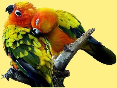 animal-oiseau-inseparable-00-art.jpg