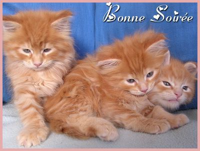 images-bebes-animaux (13)-BorderMaker