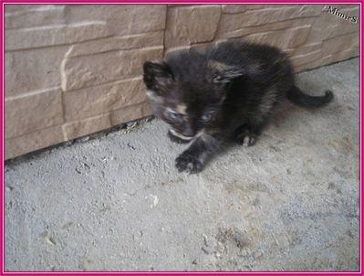 chatons (18)